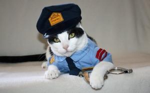police cat, cat, cat photos, cat pictures, cute cat photos, cute cat ...