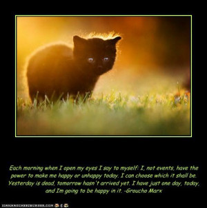 Inspirational Cat Funny Today at big cat rescue mar 15
