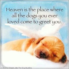 all dogs go to heaven more doggie animal lovers dogs in heavens so ...