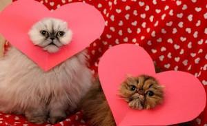 Funny Cat Valentine Quotes Picture