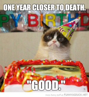 grumpy angry cat lolcat animal birthday party hat one year closer ...