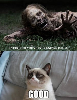 What's Your Favorite Grumpy Cat Meme?