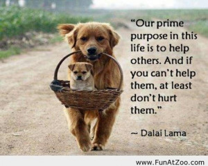 Funny Dalai Lama Quote of the day
