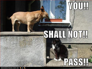 funny-dog-pictures-lotr-dog-yells-at-cat1.jpg