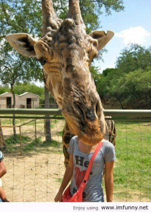 Giraffe / Funny Pictures, Funny Quotes – Photos, Quotes, Images