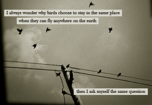 http://quotespictures.com/i-always-wonder-why-birds-choose-to-stay-in ...