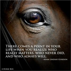 Horse eye reference