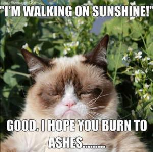lol-cat-funny-grumpy-cat-meme-captioned-images-of-animals.jpg