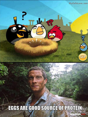 Angry Birds are trolled by Bear Grylls - funny image