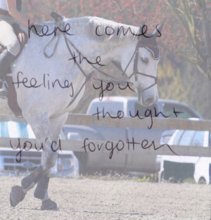 bond between horse and rider quotes