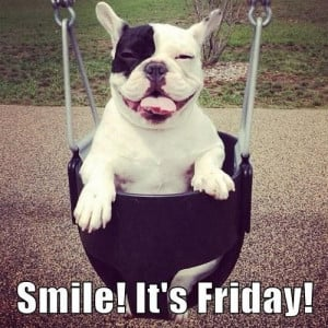 Smile! It's Friday! #Friday #Funny #Dogs #FrenchBulldog