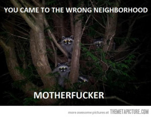 Funny photos funny raccoons tree wrong neighborhood