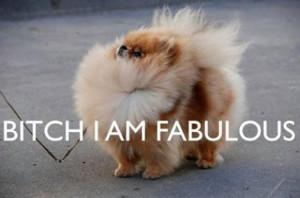 cute, dog, fluffy, funny