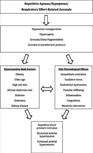 alcohol hypertension pathophysiology