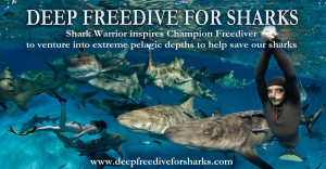Wildlife Wednesday - Deep Freedive for Sharks
