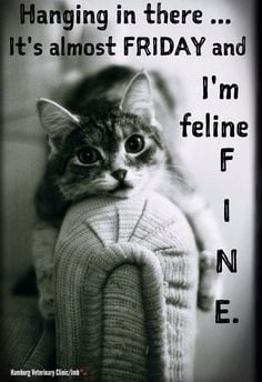 It's almost FRIDAY and I'm feline FINE! The weekend is almost here ...