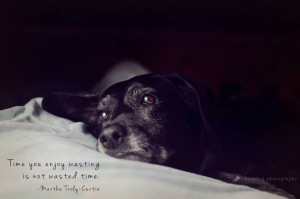 Dog Photography, black lab #quote