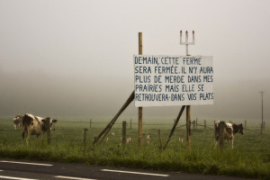 Cows in a field by a roadside. There is a sign that reads (in French ...