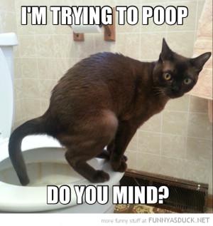 Funny Cat Poop