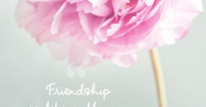 friendship-is-like-a-flower-quotes-sayings-pictures-375x195.jpg