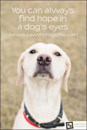 dog-quotes-toronto-dog-photographer-April