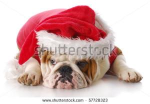 Christmas Dog Pug Santa Hat