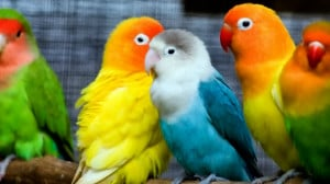 Colorful Love Birds, Pictures, Photos, HD Wallpapers