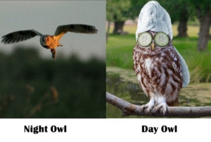 Night Owl - Day Owl