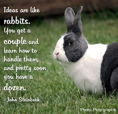 rabbits #bunny #petquotes #quotes #phrases #animals #cute #pets More