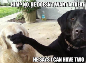 Funny Labrador Dog Meme Caption Joke Picture Photo - Him? No, he doesn ...