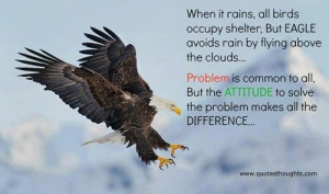 Attitude quote thoughts rain birds shelter eagle problem inspirational ...