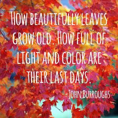 ... journal entry about my love of the leaves changing colors in the fall