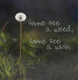 wisher.....picked many a dandelion...