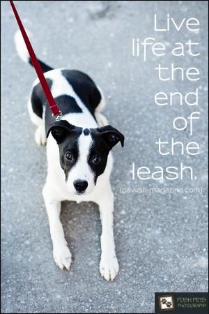 dog-quote-pawsh-magazine-09