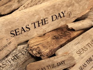 Alaska Finds: Driftwood and Seashells