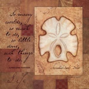 quotations art prints life shell fine art print artist stephanie ...