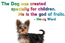 Yorkie Quotes / by The Yorkie Times