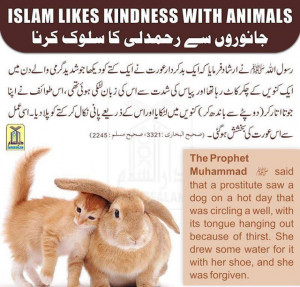 Islam Teaches Kindness With The Animals