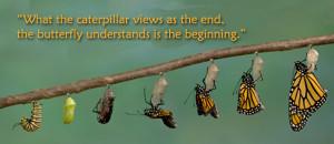 Caterpillar Quote