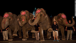 ... & Bailey Circus say allegations of elephant abuse were malicious