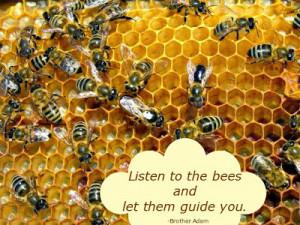 Bees Hive BEEzine · 1Y ago