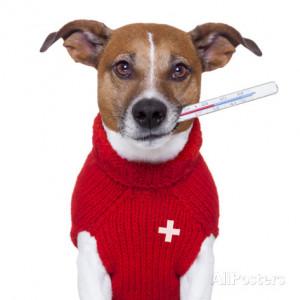 Sick Dog Premium Poster