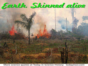 Deforestation Quote shown with photo of burning brush and timber on ...
