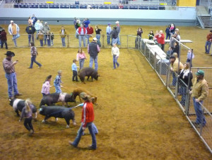 Displaying 20> Images For - Livestock Show Girl Quotes...
