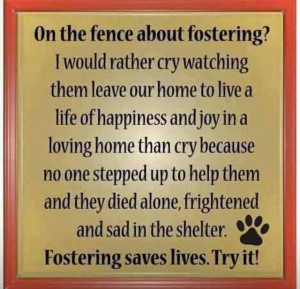 Please consider fostering a dog!