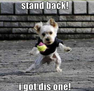 funny dog pic I got this
