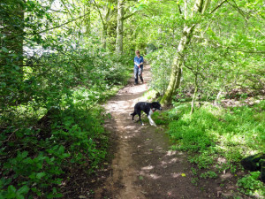 ... up behind duns castle rowan doesn t walk to the lead very well and