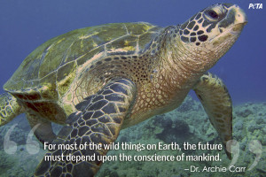 Sea Turtle, Honokahau, Kona, Hawaii. | Steve Dunleavy | CC BY 2.0