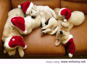 It's Christmas time to sleep / Funny Pictures, Funny Quotes – P...
