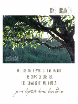 ... branches sunlight photograph with Jean-Baptiste Henri Lacordaire quote